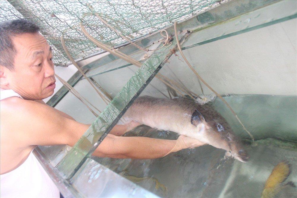 Con cá chình dài 1,5 mét, nặng 17kg: Của hiếm xưa nay-3