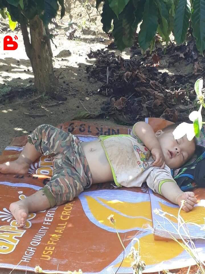 Hình ảnh cậu bé bụ bẫm nằm ngủ dưới gốc cây cà phê khi theo bố mẹ lên rẫy đốn tim cộng đồng mạng vì quá sức dễ thương-2