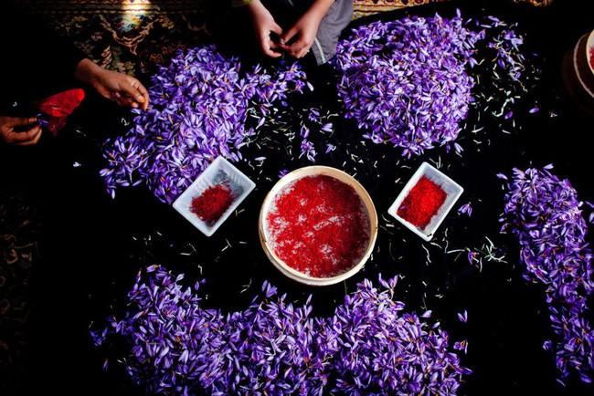 Bí mật thú vị của saffron - gia vị đắt nhất thế giới gần 1 tỷ/kg từng được Nữ hoàng Ai Cập dùng dưỡng nhan-3