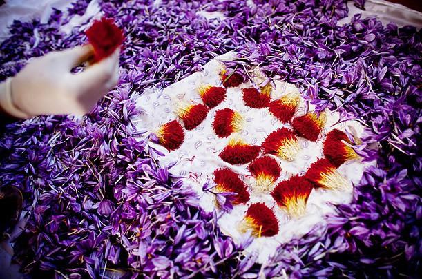 Bí mật thú vị của saffron - gia vị đắt nhất thế giới gần 1 tỷ/kg từng được Nữ hoàng Ai Cập dùng dưỡng nhan-4