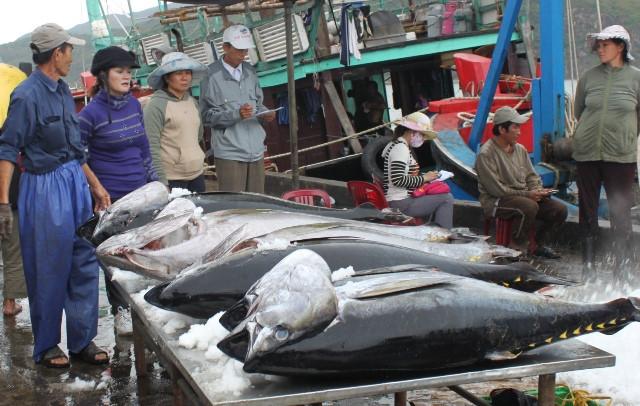 Doanh nghiệp kêu cứu vì container hải sản bị tắc ở cảng suốt nửa tháng-1