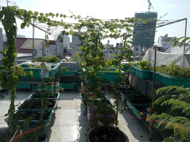 Sân thượng nhỏ mà có võ xanh mướt mát rau sạch của mẹ đảm Sài Gòn-1