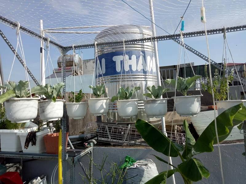 Sân thượng nhỏ mà có võ xanh mướt mát rau sạch của mẹ đảm Sài Gòn-2