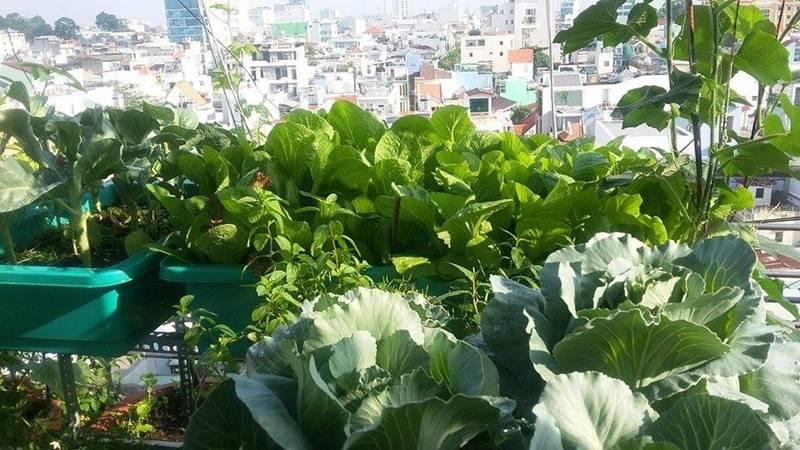 Sân thượng nhỏ mà có võ xanh mướt mát rau sạch của mẹ đảm Sài Gòn-4