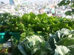 Cử nhân về quê sống nhờ 200m2 vườn, ngày ngày bán rau khắp Hà Nội-8