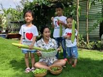 Vườn rau xanh tươi mơn mởn trong biệt thự tiền tỷ do chồng Ốc Thanh Vân trồng