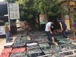 Chuyện lạ miền Tây: Phát hãi ngàn con lươn lúc nhúc trong cái can nhựa-6