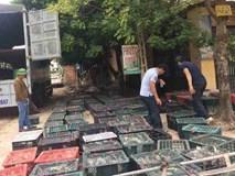 9X Bắc Giang nuôi loài chim siêu đẻ, lãi 100-120 triệu đồng/tháng