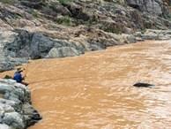 Săn thủy quái râu dài trên dòng Sê San