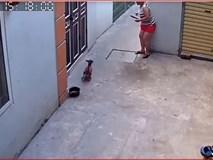 Đỉnh cao sân si: Người phụ nữ đứng chờ đầu ngõ rồi dùng gậy đả thương một chú chó