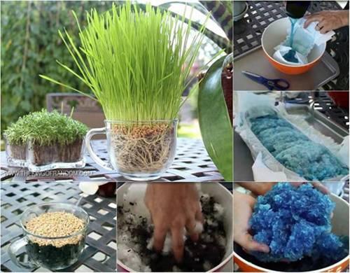 """Tiện tay"""" vứt bỉm của con ra vườn, mẹ trẻ kinh ngạc khi 1 tuần sau rau mọc tốt um-1"""