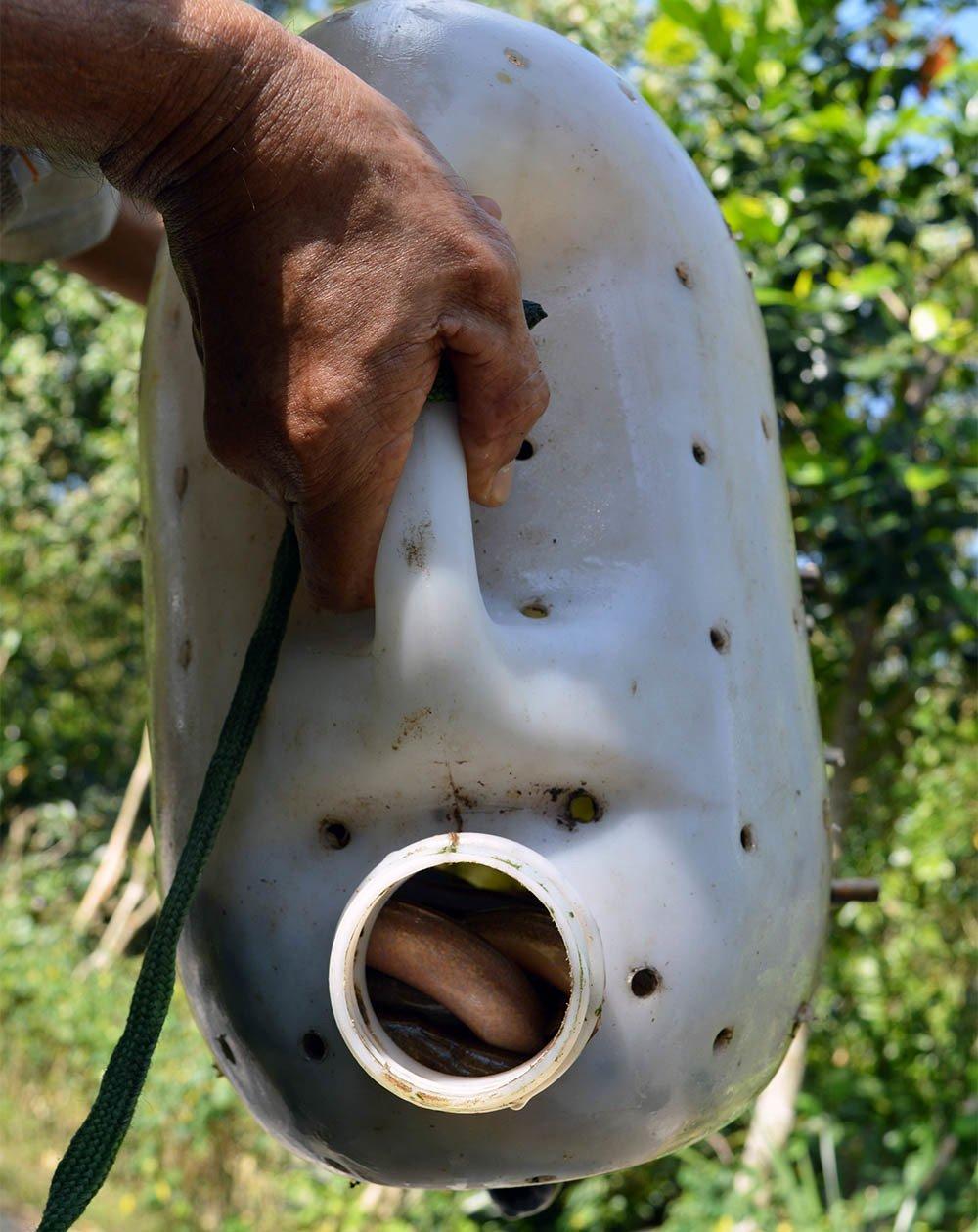Chuyện lạ miền Tây: Phát hãi ngàn con lươn lúc nhúc trong cái can nhựa-4