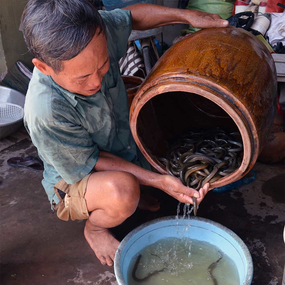 Chuyện lạ miền Tây: Phát hãi ngàn con lươn lúc nhúc trong cái can nhựa-5