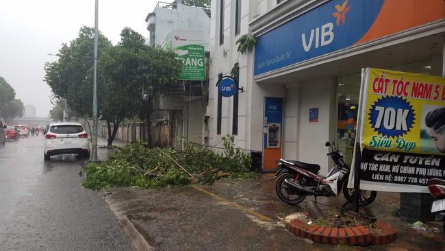 TP.HCM: Cây xanh bị bão quật ngã, hai mẹ con bé trai 6 tuổi thoát chết trong gang tấc-1