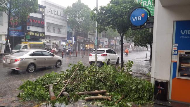 TP.HCM: Cây xanh bị bão quật ngã, hai mẹ con bé trai 6 tuổi thoát chết trong gang tấc-2