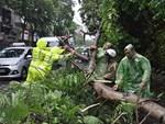 Bão số 9 khiến cây xanh ở Sài Gòn bật gốc đè chết một người đàn ông chạy xe máy trên đường-4