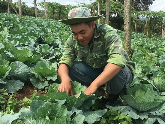 Trai 18 tuổi, trồng 6.000m2 rau cải bắp, kiếm 100 triệu đồng/năm-2