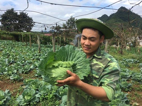 Trai 18 tuổi, trồng 6.000m2 rau cải bắp, kiếm 100 triệu đồng/năm-3