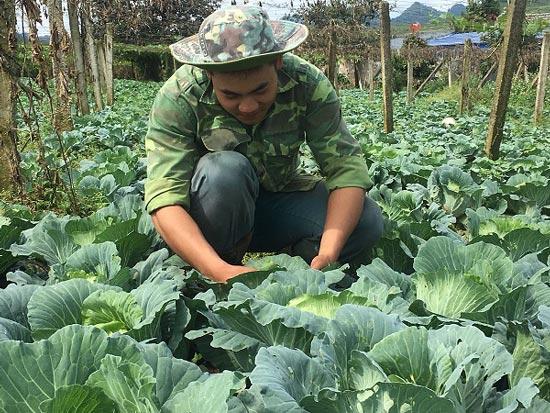 Trai 18 tuổi, trồng 6.000m2 rau cải bắp, kiếm 100 triệu đồng/năm-4