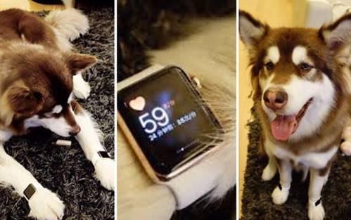 Vương Tư Thông: Thiếu gia cho chó đeo đồng hồ tiền tỷ, đùa giỡn vô số chân dài-3