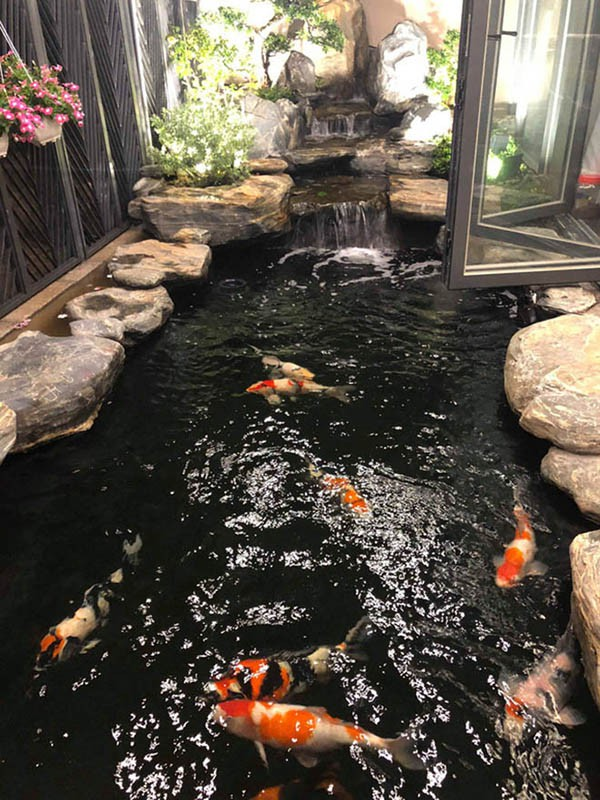 Cuộc sống giàu có trong 2 căn biệt thự xa hoa, riêng hồ cá đã hơn 1 tỷ của Cao Thái Sơn-8