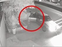 Chủ nhà chia sẻ clip, đe tên trộm đi ô tô trả 4 chậu cây trong 3 ngày trước khi dùng biện pháp mạnh
