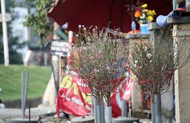 Chuyện lạ: Hoa đào bất ngờ bung nở rầm rộ, giá 200.000 đồng/cành-2