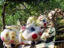 Video: Chiêm ngưỡng lợn cõng quất bonsai 10 triệu đồng sắp ra thị trường Tết
