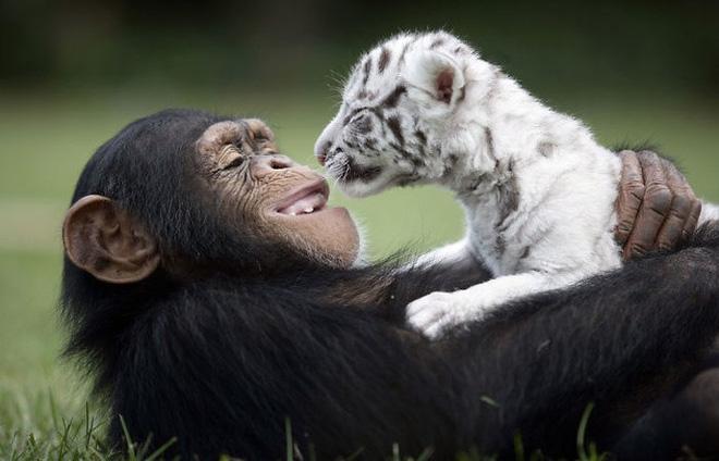 Tan chảy với loạt ảnh về tình yêu mù quáng của các con vật không cùng giống loài-1