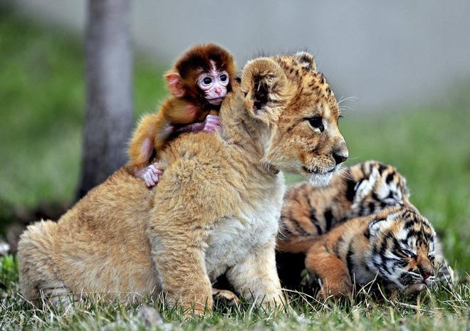 Tan chảy với loạt ảnh về tình yêu mù quáng của các con vật không cùng giống loài-2