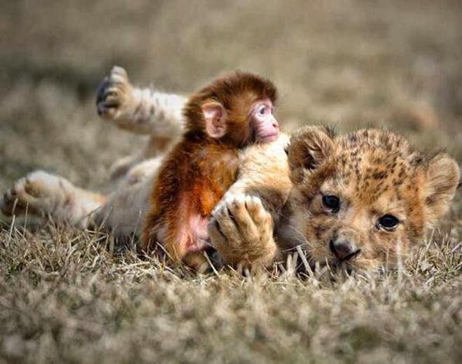 Tan chảy với loạt ảnh về tình yêu mù quáng của các con vật không cùng giống loài-3
