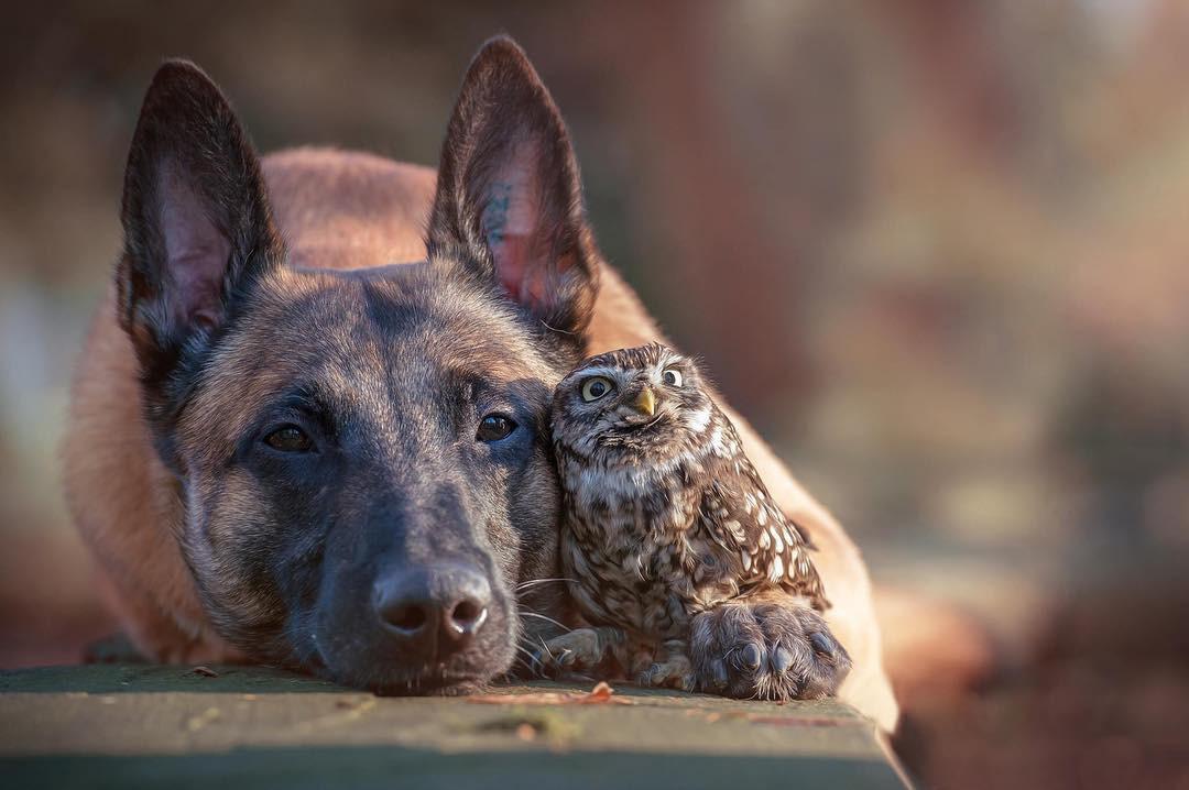 Tan chảy với loạt ảnh về tình yêu mù quáng của các con vật không cùng giống loài-4
