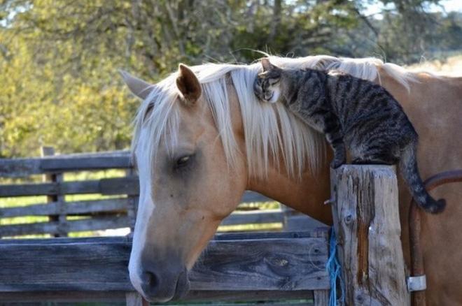 Tan chảy với loạt ảnh về tình yêu mù quáng của các con vật không cùng giống loài-10