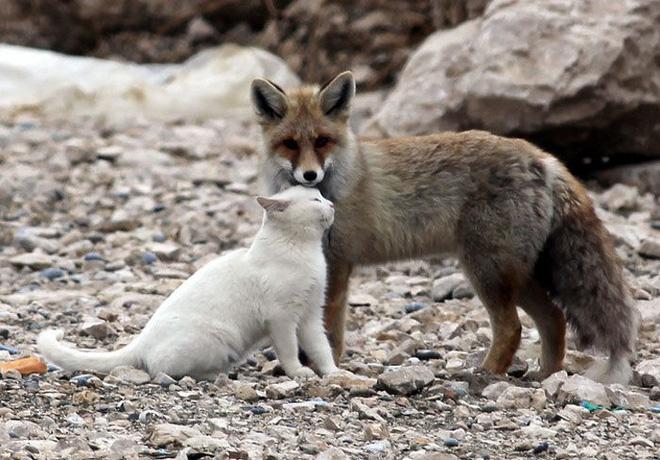 Tan chảy với loạt ảnh về tình yêu mù quáng của các con vật không cùng giống loài-11