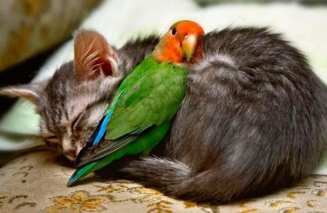 Tan chảy với loạt ảnh về tình yêu mù quáng của các con vật không cùng giống loài-6