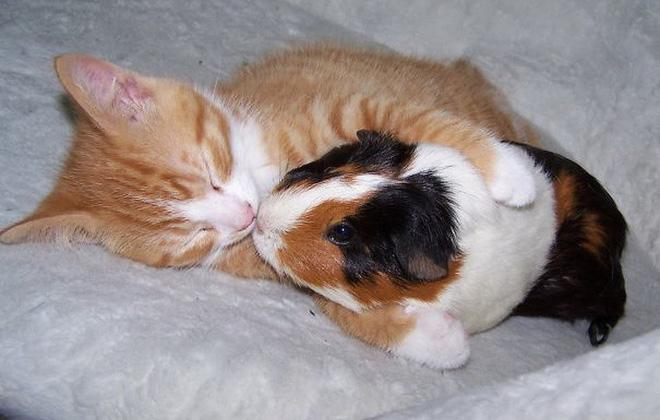 Tan chảy với loạt ảnh về tình yêu mù quáng của các con vật không cùng giống loài-8