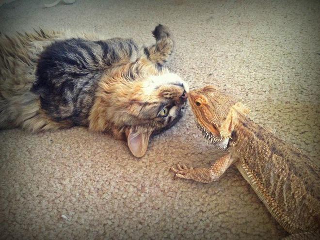 Tan chảy với loạt ảnh về tình yêu mù quáng của các con vật không cùng giống loài-9