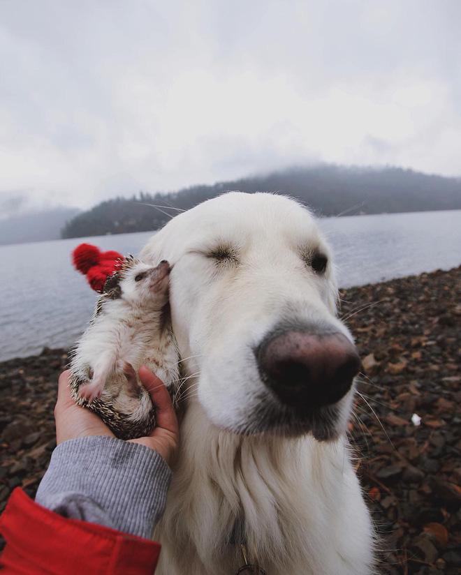 Tan chảy với loạt ảnh về tình yêu mù quáng của các con vật không cùng giống loài-13