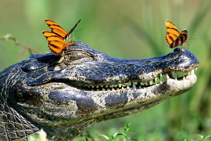 Tan chảy với loạt ảnh về tình yêu mù quáng của các con vật không cùng giống loài-15