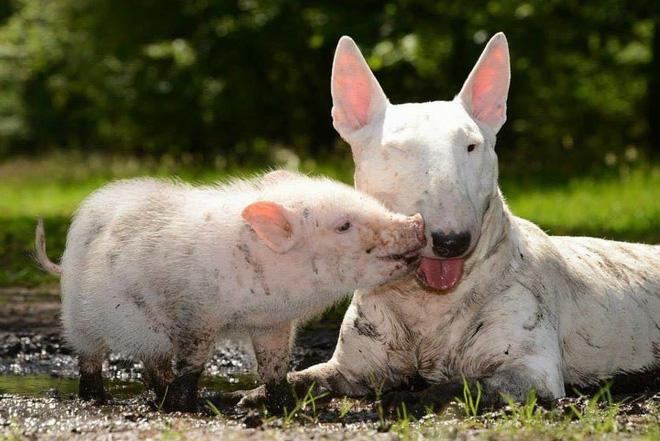 Tan chảy với loạt ảnh về tình yêu mù quáng của các con vật không cùng giống loài-19
