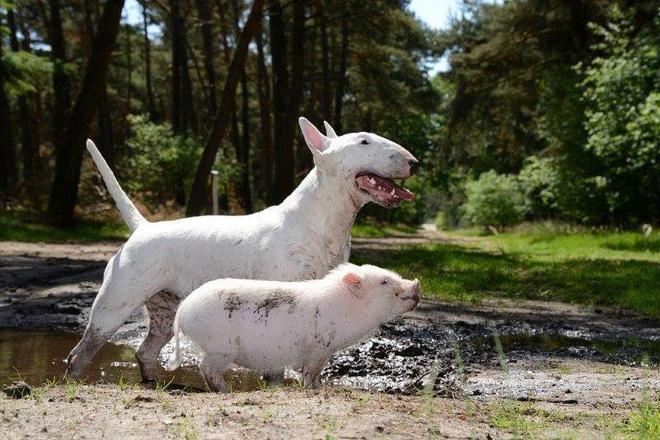 Tan chảy với loạt ảnh về tình yêu mù quáng của các con vật không cùng giống loài-21
