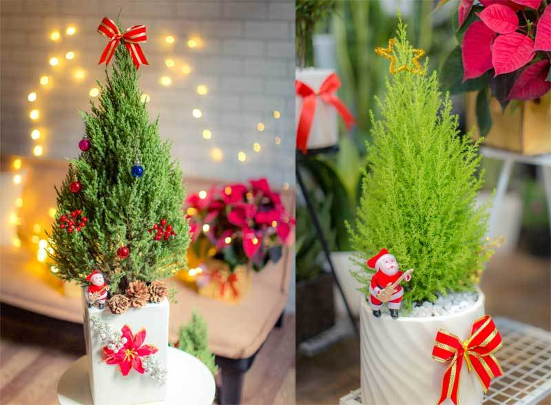 Mốt chơi cây thông lạ mùa Noel năm nay, chủ shop thu 50 triệu/ngày-1
