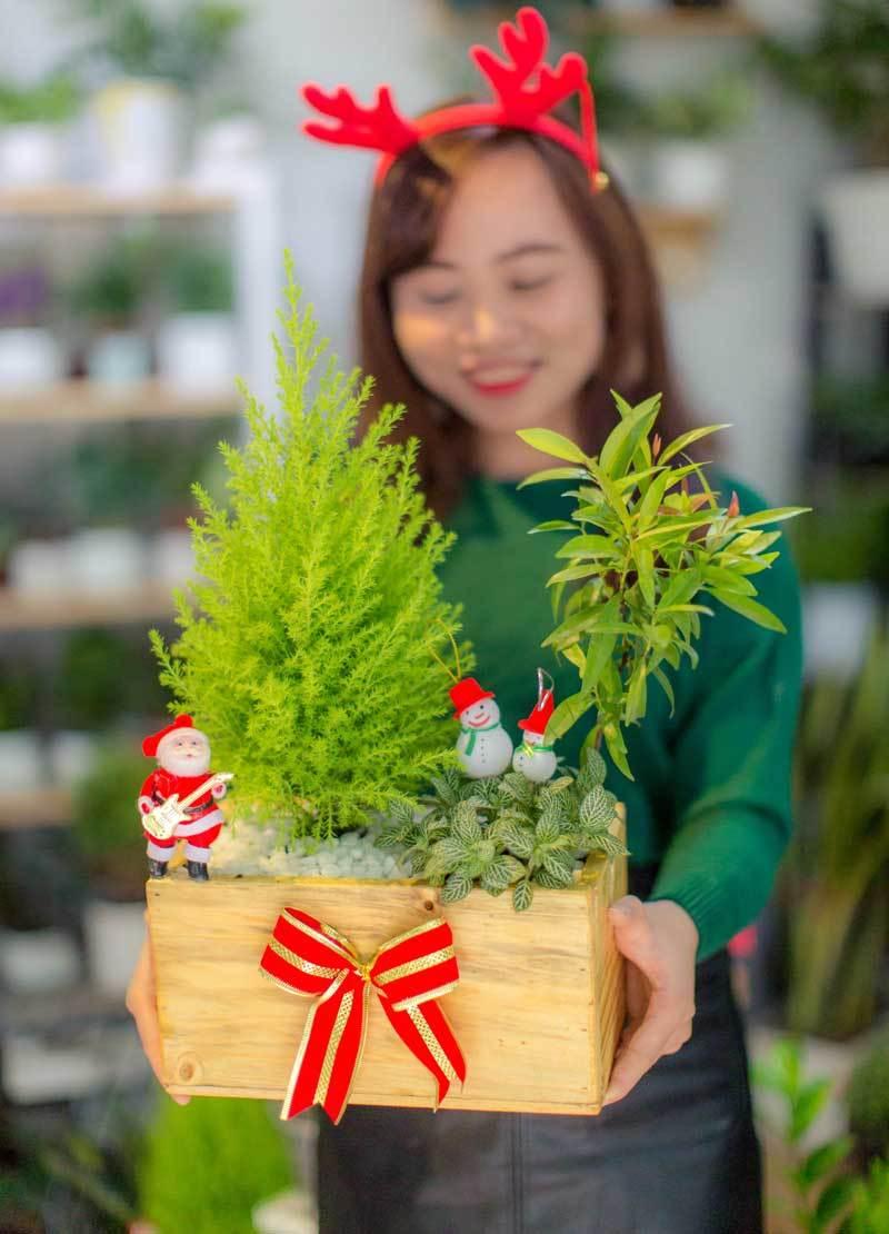 Mốt chơi cây thông lạ mùa Noel năm nay, chủ shop thu 50 triệu/ngày-2