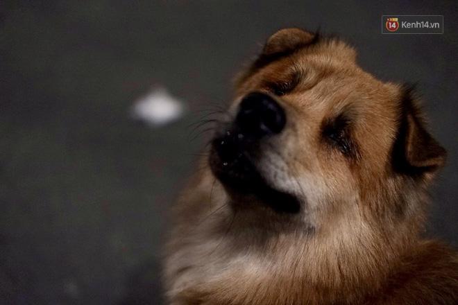 Điều kỳ diệu đã xuất hiện: Chú chó mù trở về bên anh đánh giày câm sau hơn nửa tháng mất tích-2