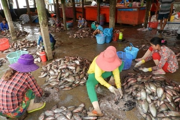 An Giang: Bí ẩn người mua gom vảy cá khắp các chợ-1