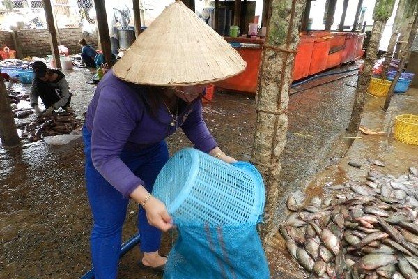 An Giang: Bí ẩn người mua gom vảy cá khắp các chợ-3