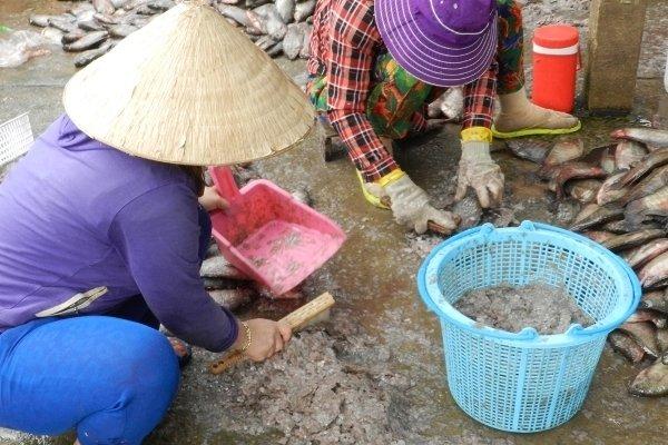 An Giang: Bí ẩn người mua gom vảy cá khắp các chợ-4