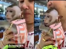 Dân mạng choáng váng với chú khỉ cắt tóc sành điệu, người đeo đầy vàng, chỉ thích ăn nho Mỹ ở Rạch Giá