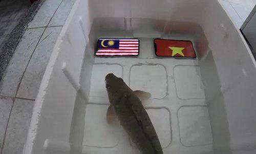 Ảnh chế các nhà tiên tri hài hước trước giờ bóng lăn trận chung kết lượt đi Việt Nam - Malaysia gây sốt-6