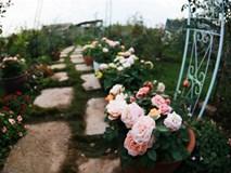 Những ngôi nhà hoa hồng bên vịnh Hạ Long